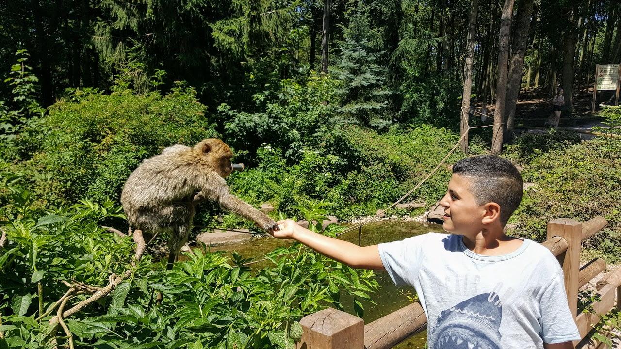 הר הקופים באלזס